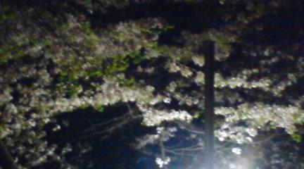 大阪城の桜1