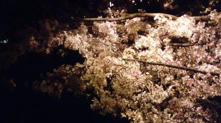 大阪城の桜2