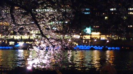 大川沿いの桜4