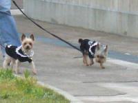 パパと走るシャロン&ラピ
