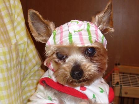 帽子のシャロン