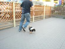 パパと走るラピ