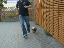 パパと走るラピ2