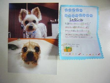 wanwanwanさんからの写真とお誕生日カード