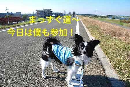 DSC_0001_20081113145740.jpg