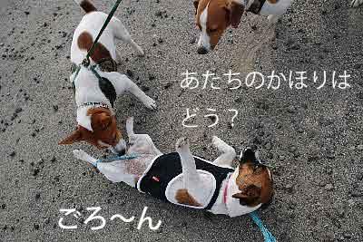 DSC_0014_20081105132531.jpg