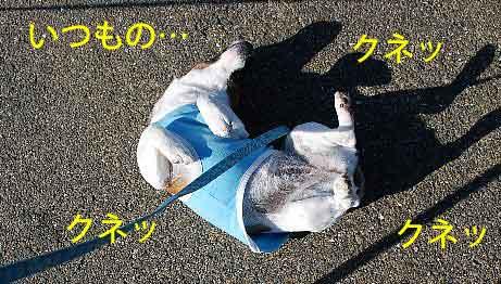 DSC_0017_20081113145748.jpg