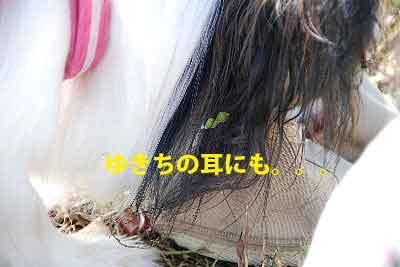 DSC_0174_20081021153727.jpg