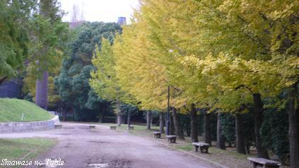 総合公園2