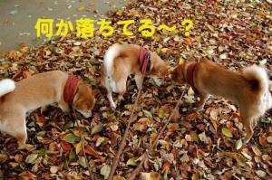 10_20081110172347.jpg