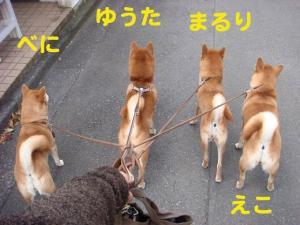 10_20081123192440.jpg