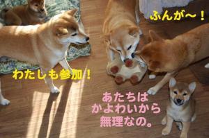 11_20081216200354.jpg