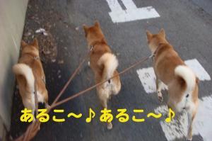 1_20081105181047.jpg