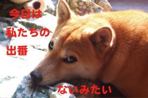 1_20081126222357.jpg
