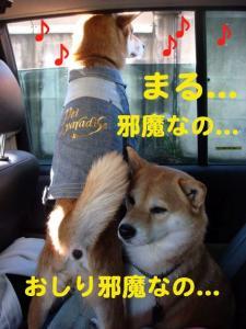 1_20081210191644.jpg