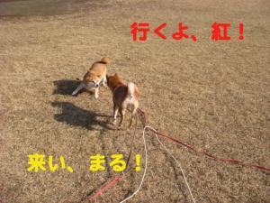 1_20081213014906.jpg
