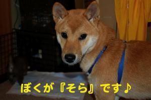 2_20081109003344.jpg