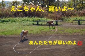2_20081117183837.jpg