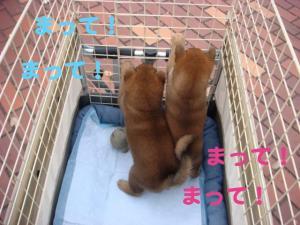2_20081124174219.jpg