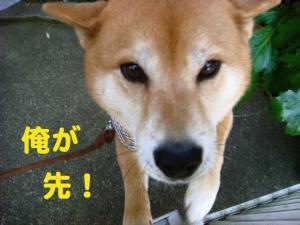 2_20081206221008.jpg