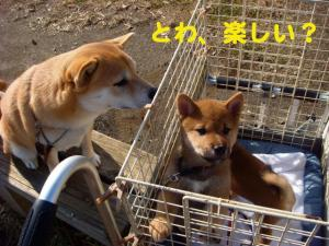 2_20081213015700.jpg