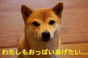 2_20081215015459.jpg