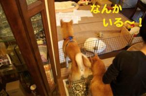 3_20081109003939.jpg