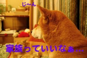 3_20081123015153.jpg
