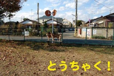 3_20081129223603.jpg