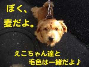 3_20081206215121.jpg