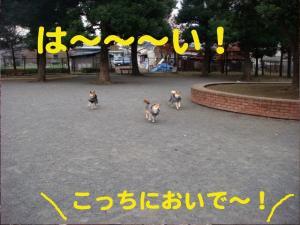 3_20081210003521.jpg