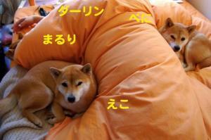 3_20081210190321.jpg