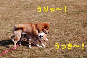 4_20081117190320.jpg