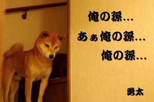 4_20081123015616.jpg