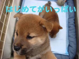 4_20081124183216.jpg