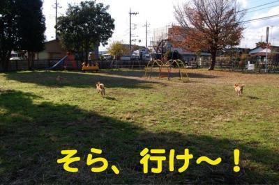4_20081129222815.jpg