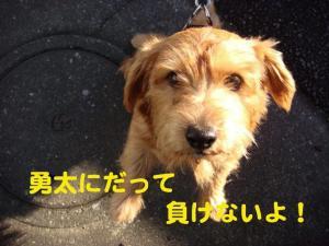 4_20081206220021.jpg
