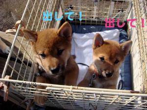 4_20081213014611.jpg
