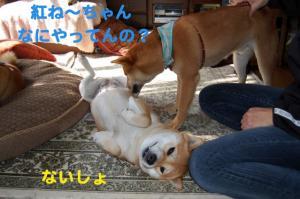5_20081105204935.jpg