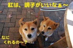 5_20081107210023.jpg