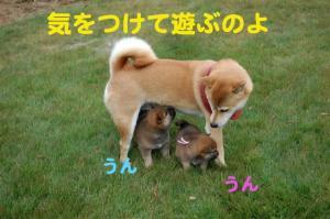 5_20081110174621.jpg