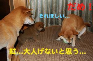 5_20081116184834.jpg