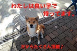 6_20081107210116.jpg