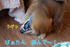 6_20081123232945.jpg
