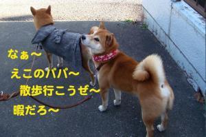 6_20081216194345.jpg