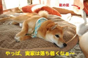 7_20081105205038.jpg