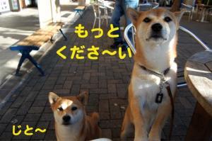 7_20081107210217.jpg