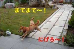7_20081110172816.jpg