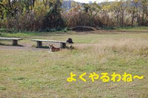 7_20081117220059.jpg
