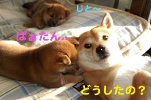 7_20081120001052.jpg